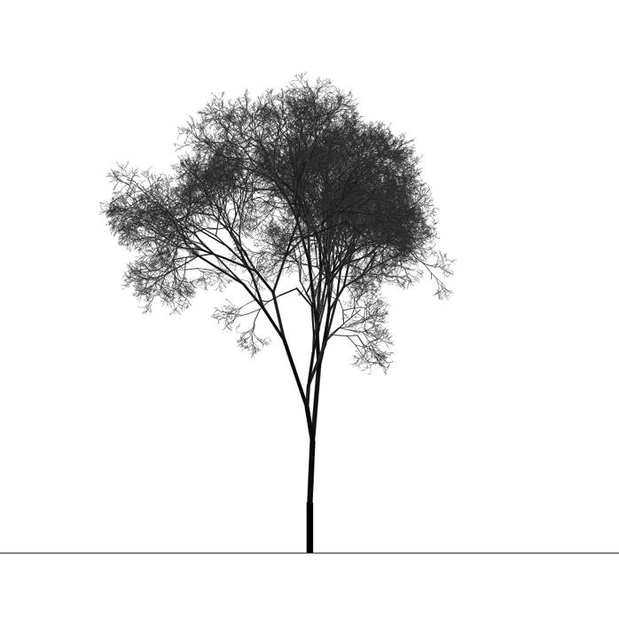 treeness